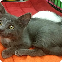 Adopt A Pet :: Sansa - Germantown, TN