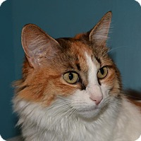 Adopt A Pet :: Princess Elise - Cincinnati, OH