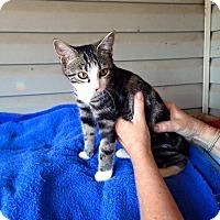 Adopt A Pet :: Trix - Pulaski, TN