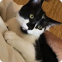 Adopt A Pet :: Quinta - Buhl, ID