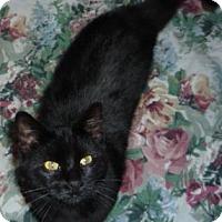 Adopt A Pet :: Nascar - Dallas, TX