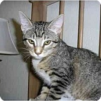 Adopt A Pet :: Polly Anna - Scottsdale, AZ