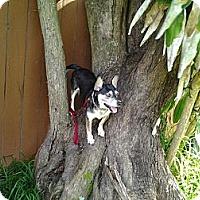 Adopt A Pet :: Marla - Miami, FL
