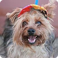 Adopt A Pet :: Tad - Canoga Park, CA