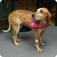 Adopt A Pet :: Fern - Providence, RI