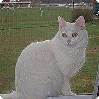 Adopt A Pet :: Squeakers - Jeffersonville, IN