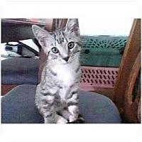 Adopt A Pet :: Rocky - Irvine, CA