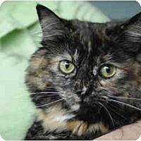 Adopt A Pet :: Angelina - Columbus, OH