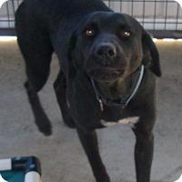 Adopt A Pet :: SOPHIA - Coudersport, PA