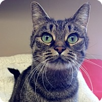 Adopt A Pet :: Mitzy - Byron Center, MI
