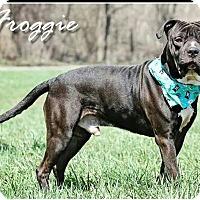 Adopt A Pet :: Froggie - Lima, OH