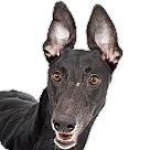 Adopt A Pet :: Opie