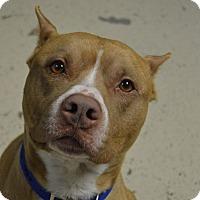 Adopt A Pet :: Romeo - Cedar Rapids, IA