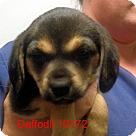 Adopt A Pet :: Daffodil