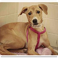 Adopt A Pet :: ON EUTHANASIA LIST - Only $45 - Litchfield Park, AZ
