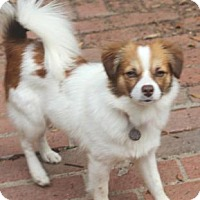 Adopt A Pet :: Pumpkin - Atlanta, GA