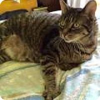 Adopt A Pet :: Eric - Livonia, MI