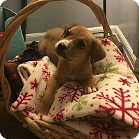 Adopt A Pet :: Lucy Lou - West Bend, WI