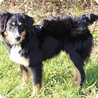 Adopt A Pet :: Amos - All Cities, SC