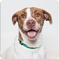 Adopt A Pet :: Lafayette - San Luis Obispo, CA