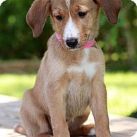 Adopt A Pet :: Lina - Waldorf, MD
