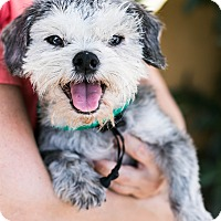 Adopt A Pet :: Mushu - Los Angeles, CA