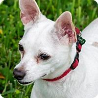 Adopt A Pet :: Mango* - Miami, FL