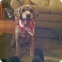 Adopt A Pet :: Lucy - Courtesy Posting - Oakhurst, NJ
