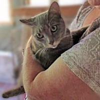 Adopt A Pet :: Sheba - Clifton Forge, VA