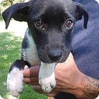 Adopt A Pet :: Sugar - Kendall, NY