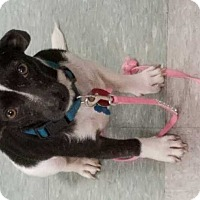 Adopt A Pet :: Pepper - San Angelo, TX