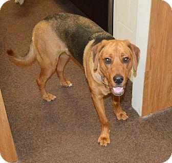 Shepherd (Unknown Type)/Hound (Unknown Type) Mix Dog for adoption in Cincinnati, Ohio - Edward