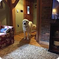 Adopt A Pet :: Mojo - Centreville, VA