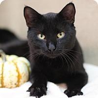 Adopt A Pet :: The Dude - Midland, MI