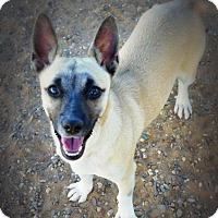 Adopt A Pet :: Svenji - Casa Grande, AZ