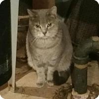 Adopt A Pet :: Sable - Minneapolis, MN