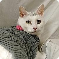 Adopt A Pet :: Penelope - Tega Cay, SC