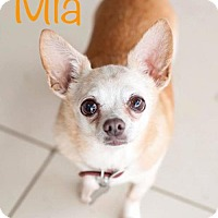 Adopt A Pet :: Mia - Los Angeles, CA