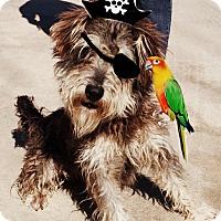 Adopt A Pet :: Captain Jack - Vancouver, BC