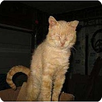 Adopt A Pet :: Barn Cats Friendly! - Whitewater, WI
