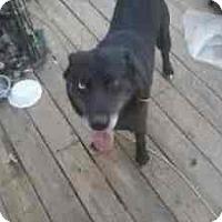Adopt A Pet :: Wolfie - latrobe, PA