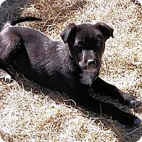 Adopt A Pet :: Chance - Waller, TX