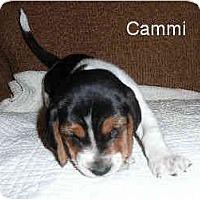 Adopt A Pet :: Cammi - Phoenix, AZ