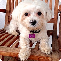 Adopt A Pet :: MISSY - Courtesy Post - Encino, CA