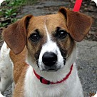 Adopt A Pet :: Maggie Mae
