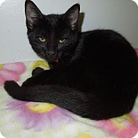 Adopt A Pet :: Susie - Medina, OH