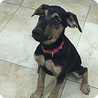 Adopt A Pet :: Toots - Mission Viejo, CA