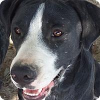 Adopt A Pet :: Bobo - Preston, CT