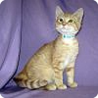 Adopt A Pet :: Everest - Powell, OH