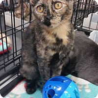 Adopt A Pet :: Torry - Harrisburg, NC